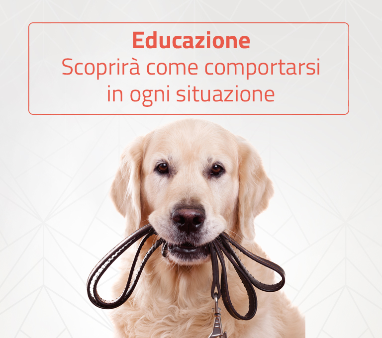 percorsi educativi e di addestramento per animali domestici